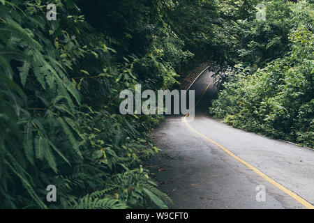 Asphalt road going through the jungle tropical forest, shallow depth of field - Stock Photo
