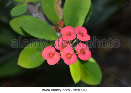 A shrub of tiny red flowers - Stock Photo