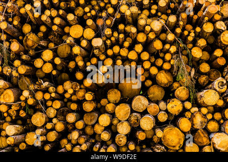 Log pile in Chies d'Apalgo, Veneto, Italy - Stock Photo