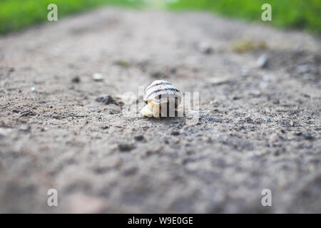 Background and foreground in defocus. A snail crawls on an asphalt road. - Stock Photo