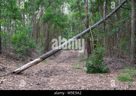 Fallen tree in the middle of a dirt road in the forest - Stock Photo