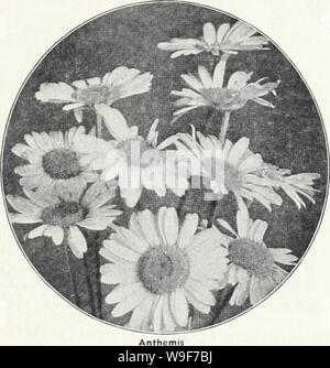 Archive image from page 20 of Currie's 65th year garden annual. Currie's 65th year garden annual  curries65thyearg19curr Year: 1940 ( PEREIIIAL FLOWER SEEDS lD PEREIIUL PLMTS J sow PERENNIAL SEEDS EARLY IN SPRING as the seed k ' germinotes better in cool weather than the heat of midsummer. P Alyssuiti (Rock Modwort) SAXATILE COMPACTUM (Bas- ket of Gold)âMasses of bright yellow flowers early in spring. Plonts, single, 25c; dor., $2.50; plants, double, 35c; doz., $3.50; seeds, 1/4 oz., 40c; Pkt., 10c. AMPELOPSIS VEITCHII (Boston IvylâHardy climber, clinging to stone work, chonging to very prett - Stock Photo