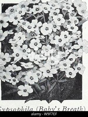 Archive image from page 20 of Currie's garden annual  1939. Currie's garden annual : 1939  curriesgardenann19curr_5 Year: 1939 ( Heliotrope HELIOTROPE It is not generally known that this favorite plant con be grown from seed to flower the first season. The seed should be sown early in spring indoors, and transplanted so as to have a constant supply of flowers during the early summer months un- til late fall. Tender perennial. MAMMOTH FLOWERED—The plants make a compact growth and produce large trusses of flowers. 1/4 oz., 75c; KING OF THE BLACKS—Deep pur pie, almost black. Pkt., 15c. Rapid grow - Stock Photo