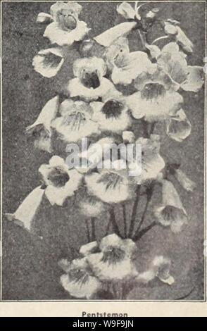 Archive image from page 24 of Currie's garden annual (1942). Currie's garden annual  curriesgardenann19curr_7 Year: 1942 ( PHYSOTEGIA (False Dragon's Head) VIRGINICIA—Flowers pink, on stems 3 feet high. Planti, 25c; seeds, Pkt., 10c. CHINESE LANTERNS (Physalis Francheti) Easy to grow and becoming more popular each year for decorative purposes. The color of these lan- tern fruits is orange-vermilion ond are everlasting offer dying. Single plants produce as many os 30 lanterns. We offer strong root divisions to mature the coming summer. Plants, 2Sc; seeds, Pkt., lOe. PARNASSIA (Palustris) Dwarf - Stock Photo