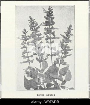 Archive image from page 26 of Currie's 65th year garden annual. Currie's 65th year garden annual  curries65thyearg19curr Year: 1940 ( -TiTOH SILENE (Catchfly) PENDULA COMPACTA — Dworf, hardy perennial, pretty pink flowers; 6'. Pkt., 10c. SCHAFTA (Autumn Catchfly) — Masses of bright pink flowers from July to October. Plants, 25e; seeds, Pkt., 15c. ALPESTRIS—Dwarf rock plant, 4' high, pure white flowers in May and June. Plants, 25e; doi., $2.50. STATIC E (Sea Lavender) LATIFOLIA—Tufts of leathery leaves, large heads of purplish- blue flowers. Plants, 25c; doi., $2.50; seeds, Pkt., 10c. DUMOSA De - Stock Photo