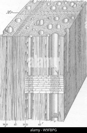 Archive image from page 28 of Timber and some of its - Stock Photo