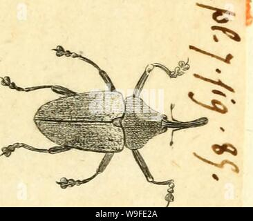 Archive image from page 34 of [Curculionidae] (1800) - Stock Photo