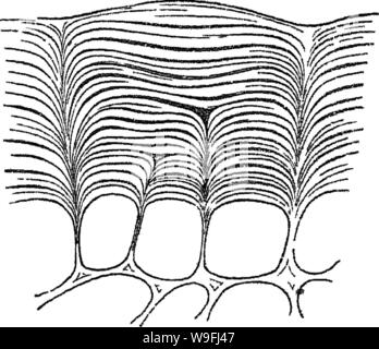 Archive image from page 45 of Principles of the anatomy and