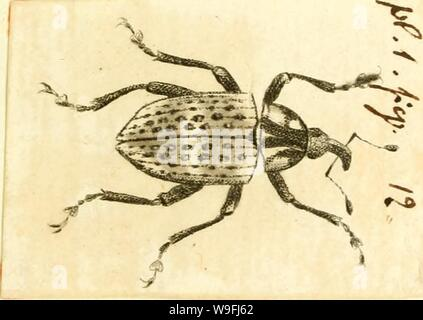 Archive image from page 46 of [Curculionidae] (1800) - Stock Photo