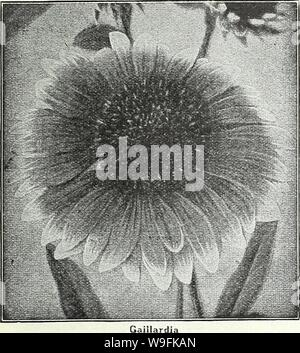 Archive image from page 50 of Currie Bros  fifty-eighth year. Currie Bros. : fifty-eighth year 1933  curriebrosfiftye19curr Year: 1933 ( MILWAUKEE, WISCONSIN Page 47    GAILLARDIA THE DAZZLER—The flowers are very large, of dark, rich red with a bright orange tip on the end of each petal, making it a very attractive flower for florists and for table decoration. Seeds....Pkt. 20c GAILLARDIA GRANDIFLORA PORTOLA HYBRIDS—This superb new strain of perennial Gaillardias produces flowers of immense size, the colors ranging through shades of bronzy red, with golden tipped petals; splendid for cutting. - Stock Photo