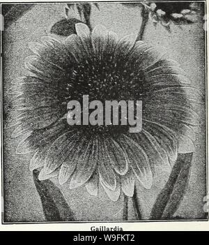 Archive image from page 51 of Currie's garden annual  62nd. Currie's garden annual : 62nd year spring 1937  curriesgardenann19curr 3 Year: 1937 ( Page 48 CURRIE BROTHERS CO MILWAUKEE, WIS GAILLARDIA THE DAZZLER—The flowers are very large, of dark, rich red with a bright orange tip on the end of each petal, mak- ing it a very attractive flower for florists and for table decoration. Seeds Pkt. 20c PORTOLA HYBRIDS—This superb new strain of perennial Gaillardias produces flowers of immense size, the colors ranging through shades of bronzy red, with golden tipped petals; splendid for cutting. Seeds - Stock Photo