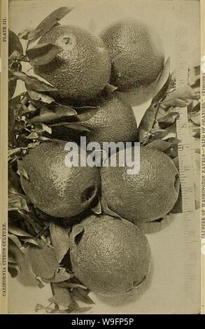 Archive image from page 60 of Culture of the citrus in. Culture of the citrus in California  cultureofcitrusi00cali Year: 1900 ( - Stock Photo