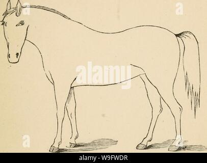 Archive image from page 74 of Cunningham's device for stockmen and. Cunningham's device for stockmen and farmers  cunninghamsdevic00cunn Year: 1882 ( DESCRIPTION Defects Brand - Stock Photo
