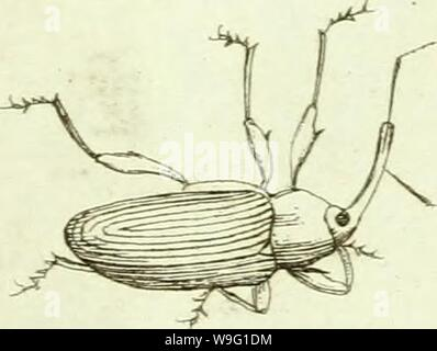 Archive image from page 92 of [Curculionidae] (1800) - Stock Photo