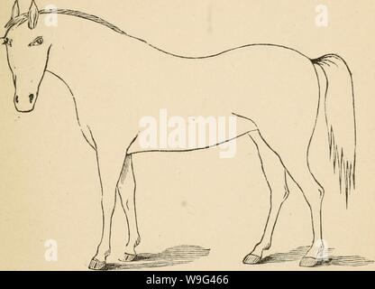 Archive image from page 106 of Cunningham's device for stockmen and. Cunningham's device for stockmen and farmers  cunninghamsdevic00cunn Year: 1882 ( DESCRIPTION Defects. Brand - Stock Photo
