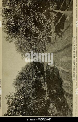 Archive image from page 114 of Culture of the citrus in. Culture of the citrus in California  cultureofcitrusi00cali Year: 1900 ( - Stock Photo