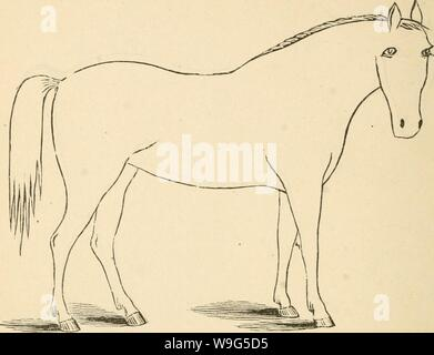 Archive image from page 115 of Cunningham's device for stockmen and. Cunningham's device for stockmen and farmers  cunninghamsdevic00cunn Year: 1882 ( DESCRIPTION Color Marks Height - Stock Photo
