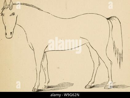Archive image from page 120 of Cunningham's device for stockmen and. Cunningham's device for stockmen and farmers  cunninghamsdevic00cunn Year: 1882 ( DESCRIPTION Defects. Brand. . - Stock Photo