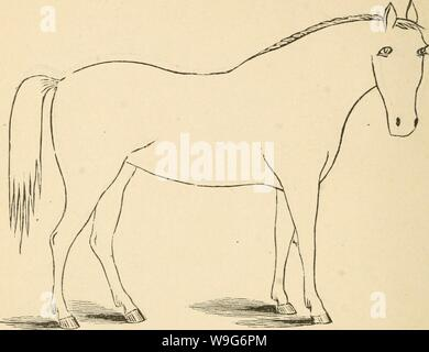 Archive image from page 125 of Cunningham's device for stockmen and. Cunningham's device for stockmen and farmers  cunninghamsdevic00cunn Year: 1882 ( DESCRIPTION Color Marks Height - Stock Photo