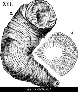 Archive image from page 128 of A dictionary of the fossils - Stock Photo