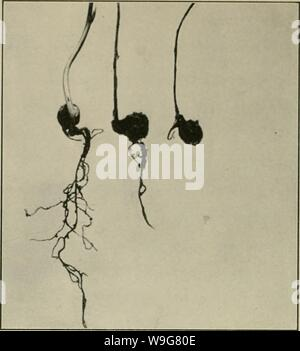 Archive image from page 135 of The culture and diseases of - Stock Photo