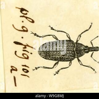 Archive image from page 142 of [Curculionidae] (1800) - Stock Photo