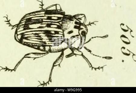Archive image from page 148 of [Curculionidae] (1800) - Stock Photo