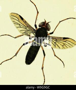 Archive image from page 149 of The natural history of British - Stock Photo