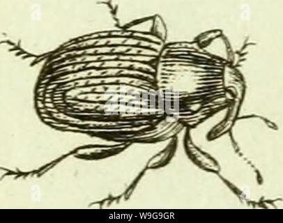 Archive image from page 150 of [Curculionidae] (1800) - Stock Photo