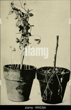 Archive image from page 150 of The culture and diseases of - Stock Photo