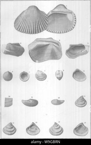 Archive image from page 173 of Mollusca and Crustacea of the - Stock Photo