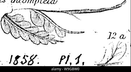 Archive image from page 173 of A dictionary of the fossils - Stock Photo