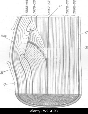 Archive image from page 228 of Timber and some of its - Stock Photo