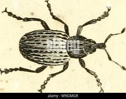 Archive image from page 288 of [Curculionidae] (1800) - Stock Photo