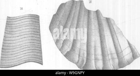 Archive image from page 305 of Brachiopoda and Lamellibranchiata of the - Stock Photo