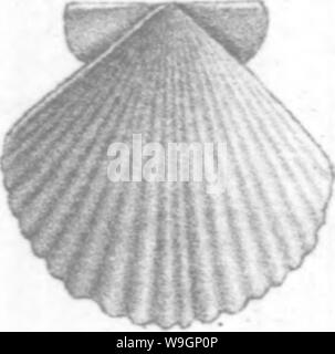 Archive image from page 307 of Brachiopoda and Lamellibranchiata of the - Stock Photo