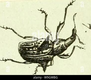 Archive image from page 370 of [Curculionidae] (1800) - Stock Photo