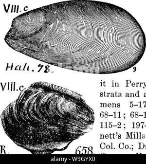 Archive image from page 429 of A dictionary of the fossils - Stock Photo