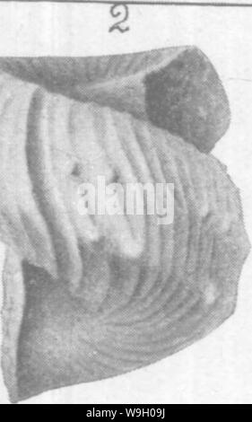 Archive image from page 440 of Gasteropoda and Cephalopoda of the - Stock Photo