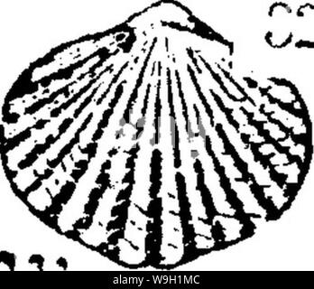 Archive image from page 467 of A dictionary of the fossils - Stock Photo