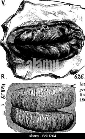 Archive image from page 482 of A dictionary of the fossils Stock Photo