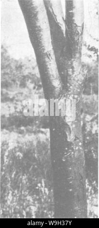 Archive image from page 518 of The encyclopedia of practical horticulture; - Stock Photo