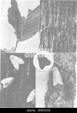 Archive image from page 549 of The encyclopedia of practical horticulture; - Stock Photo