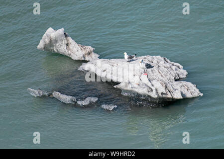 two sea gulls perched on a small iceberg in glacier bay in alaska as seen looking down from a cruise ship - Stock Photo