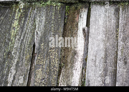 Background of old wooden moss covered wooden boards - Stock Photo