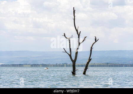 Partially submerged dead tree due to rising water levels, lake Naivasha, Kenya, East Africa - Stock Photo