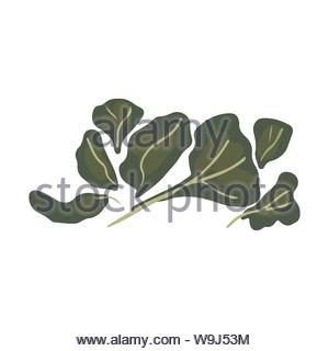 Green leavess salad illustration isolated on white background. Flat Cartoon style. Vector illustration. - Stock Photo
