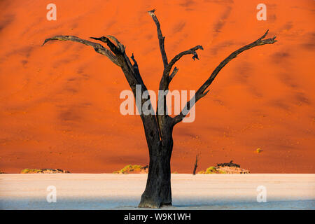 Dead acacia tree silhouetted against sand dunes at Deadvlei, Namib-Naukluft Park, Namibia, Africa - Stock Photo