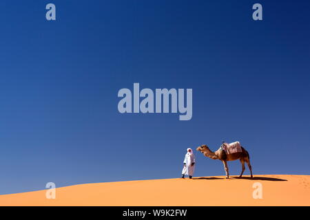Berber man with camel on the ridge of an orange sand dune in the Erg Chebbi sand sea, Sahara Desert near Merzouga, Morocco, North Africa, Africa - Stock Photo