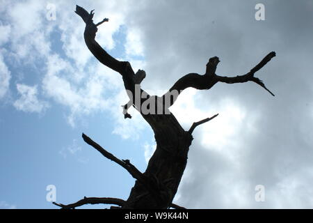 Image of dark, bare tree trunk in front of a cloudy and sunny sky in Rivington Pike - Stock Photo
